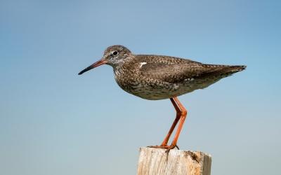 Vogelbeobachtung auf der Hallig Langeneß