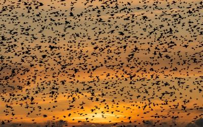 Vogelbeobachtung im Deutsch-Dänischen Grenzgebiet