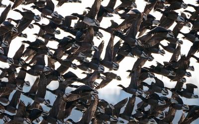 Vogelbeobachtung auf der Hallig Südfall